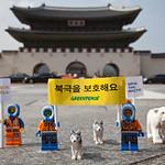 'Save the Arctic' LEGO Scene in Seoul